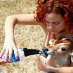 Kris dando leite para a Bezerrinha