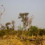 Pássaros no Chaco