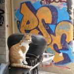 Gato Motoqueiro
