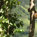 Macaco em Ella