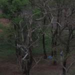 Duas araras no Parque das Nações Indígenas